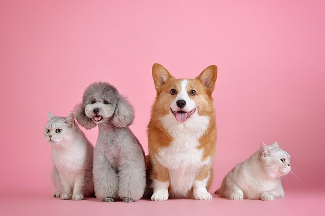 Come creare un ufficio per animali domestici