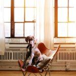 Come creare un ufficio pet friendly Pet