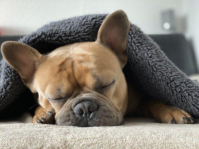 Perché dormire è così importante